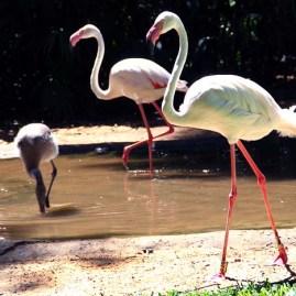 Parque das Avesl (08)