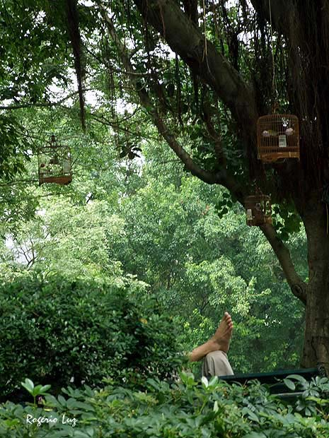 O dono do passarinho chega a tirar um cochilo no banco do jardim.