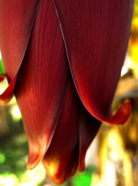 Natureza bananeira (03)