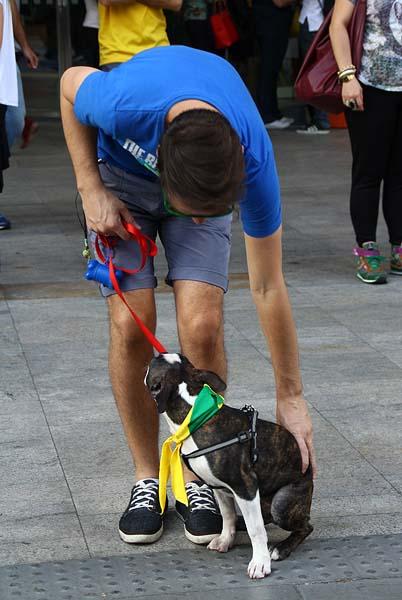 O cachorrinho foi passear de cachecol das cores do Brasil