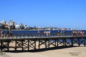 MSC Poesia Punta Del Este 2014 (05.1)