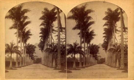 Esterografia do Imperial Jardim Botânico do Rio de Janeiro (William Bell, 1882) Wikimedia Commons