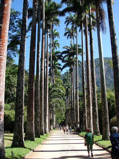 Jardim Botânico do Rio de Janeiro (Wikimedia Common