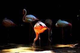 Parque das Aves, Foz de Iguaçu