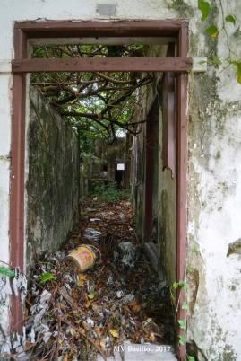 Interior da casa em ruínas, já sem telhado. Foto M.V. Basílio