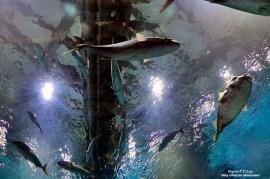 AquaRio Aquario M Rio Janeiro 26