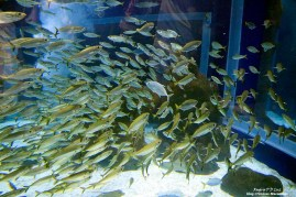AquaRio Aquario M Rio Janeiro 27