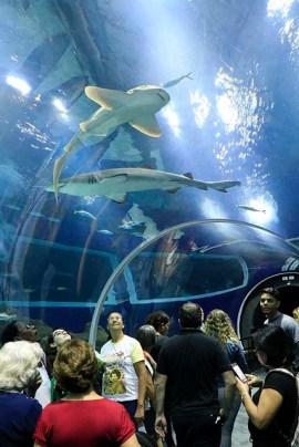 AquaRio Aquario M Rio Janeiro 32