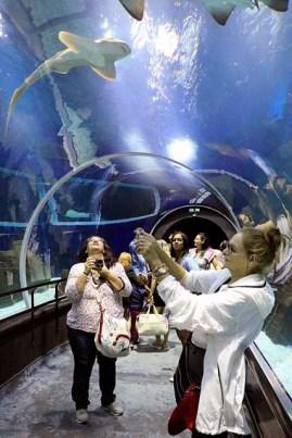 AquaRio Aquario M Rio Janeiro 33