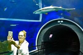 AquaRio Aquario M Rio Janeiro 38