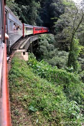 Trem Curitiba-Morretes 24